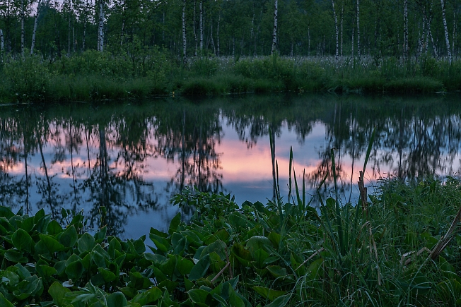 У болота вечером
