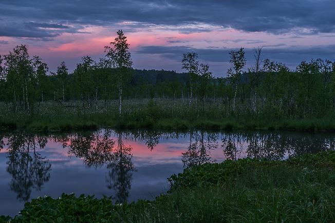Вечер на болотце