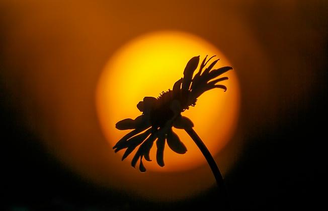 Солнце на солнце