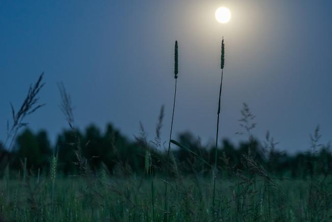 Пейзаж с луной