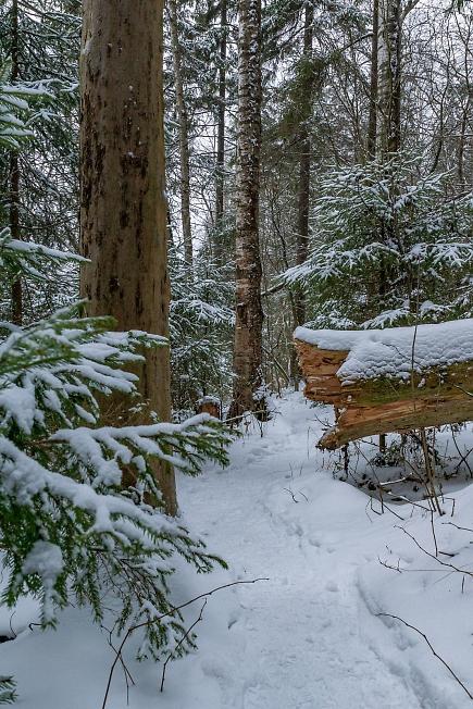 Тропинка вдоль Лесного