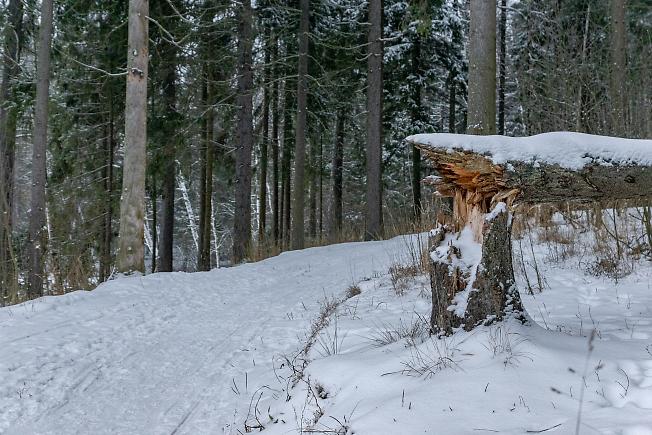 Лыжная трасса на Лесном
