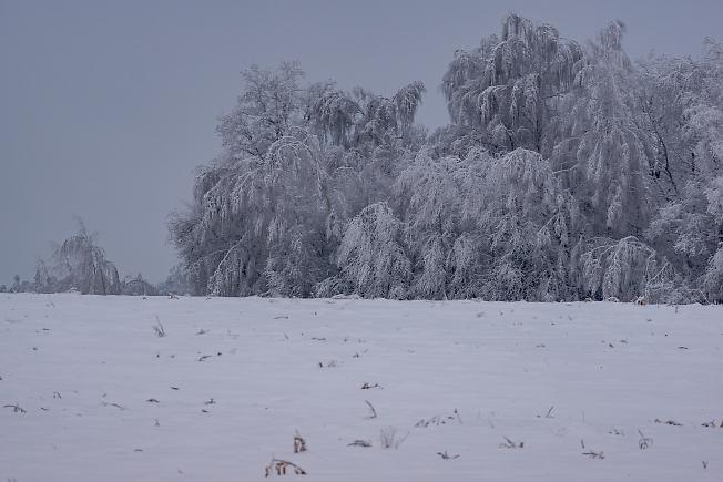 Пушистая зима