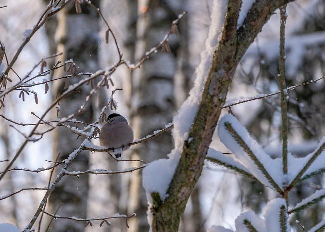 Птичка-невеличка