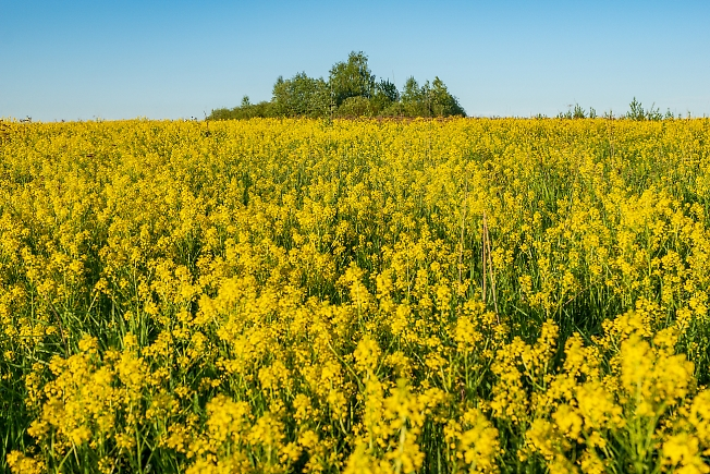 Жёлто-синие-летние краски