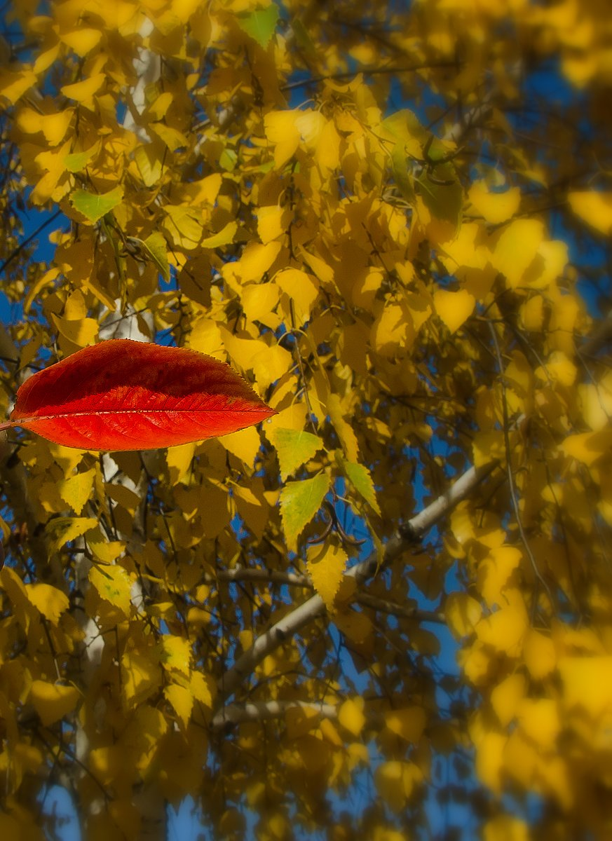 Осенний поцелуй картинки