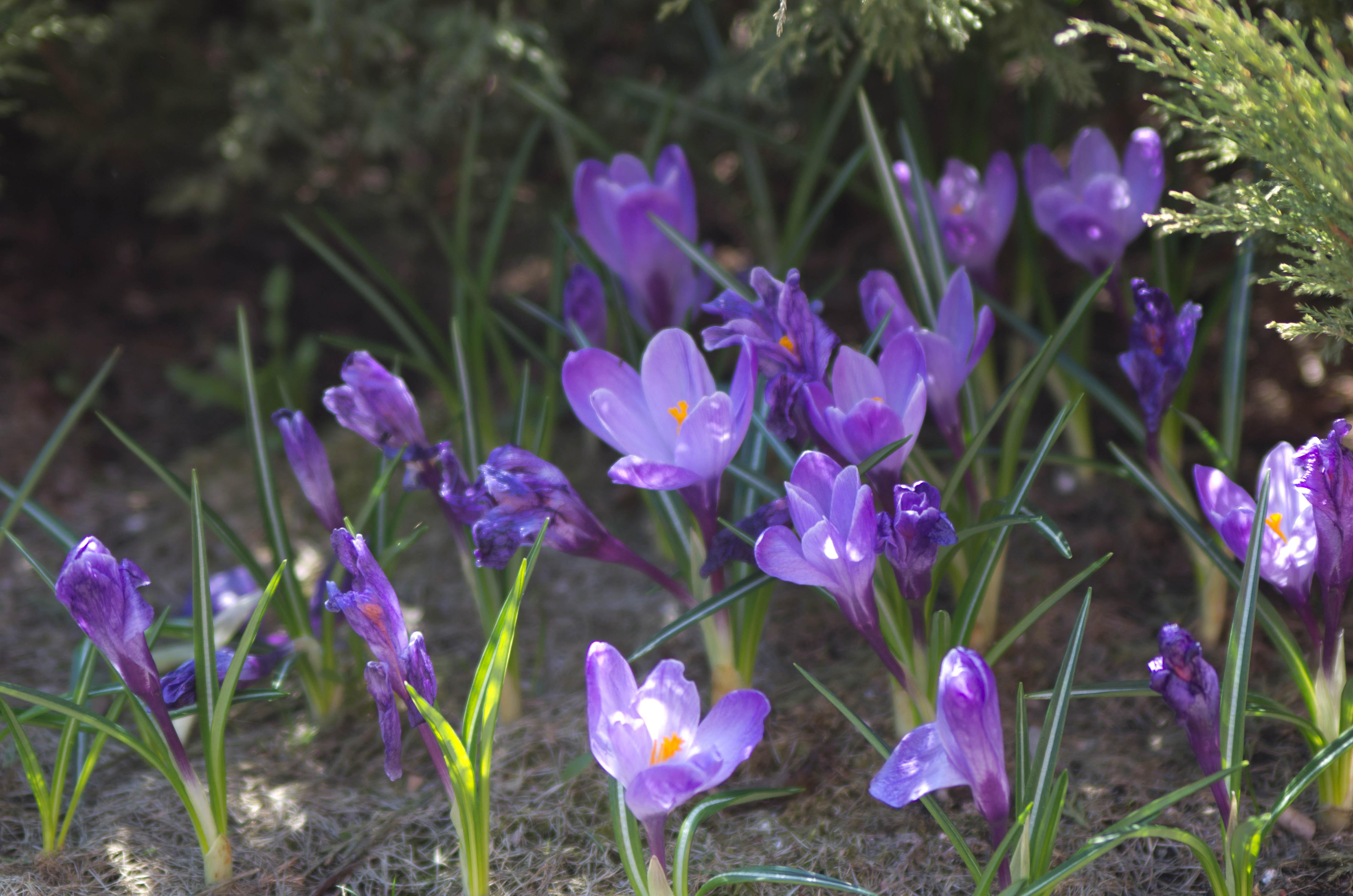 старые цветы цветущие в мае фото и название заставляй своего племянника