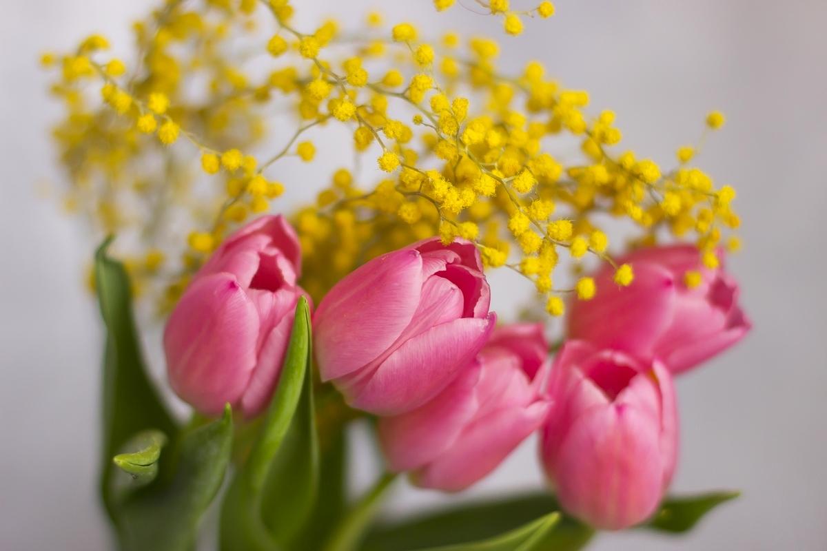 картинки с мимозами и тюльпанами питт наконец-то может