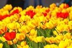 Хорош цветок, да скоро вянет