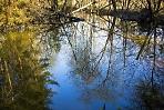 Весна бобрового пруда