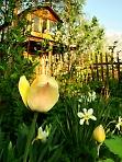 Солнечные цветы, тёплого мая улыбки..