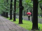 В Подмосковье ожидается сентябрьская погода