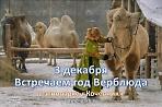 Встречаем год Верблюда по тотемному гороскопу.
