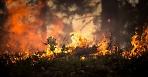 Комитет лесного хозяйства Московской области объявил о начале пожароопасного сезона
