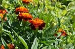 1 июня в Сергиевом Посаде стартует благоустройство цветников