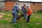 Лагерные познакомились ссобаками