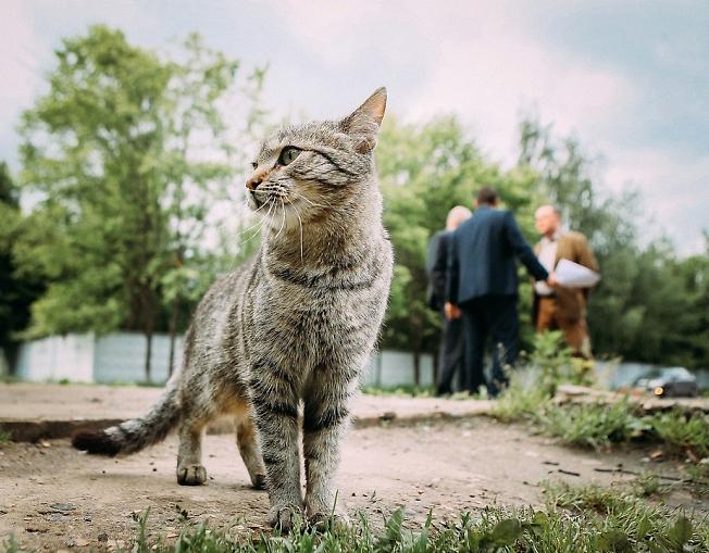июнь 2017, котик и работа