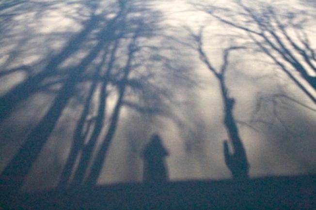 Утро в лесу. (Театр теней)
