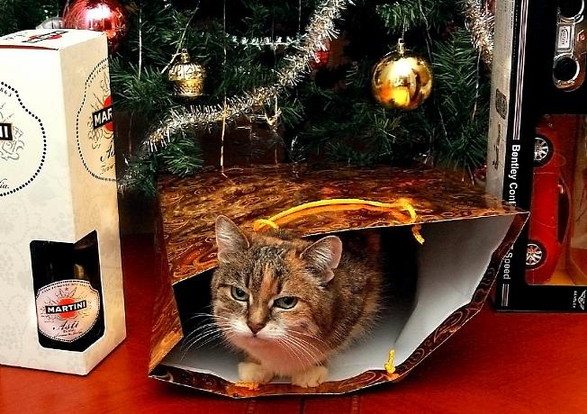 Ну,и чем я не подарок ?