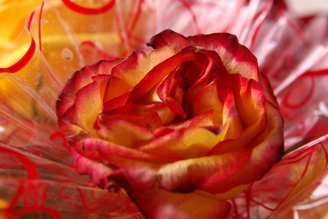 Другая роза
