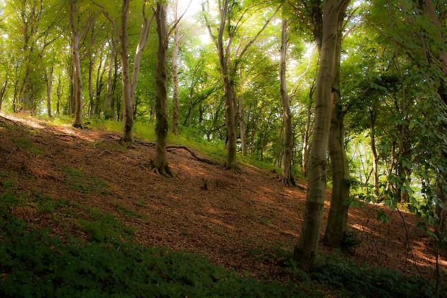 Галичина, лес.
