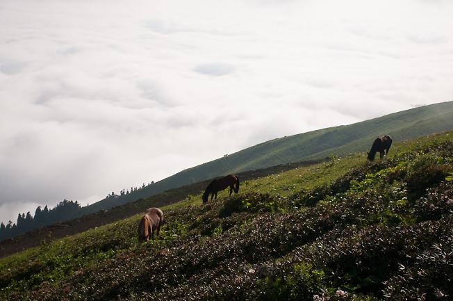 Лошади в облаках
