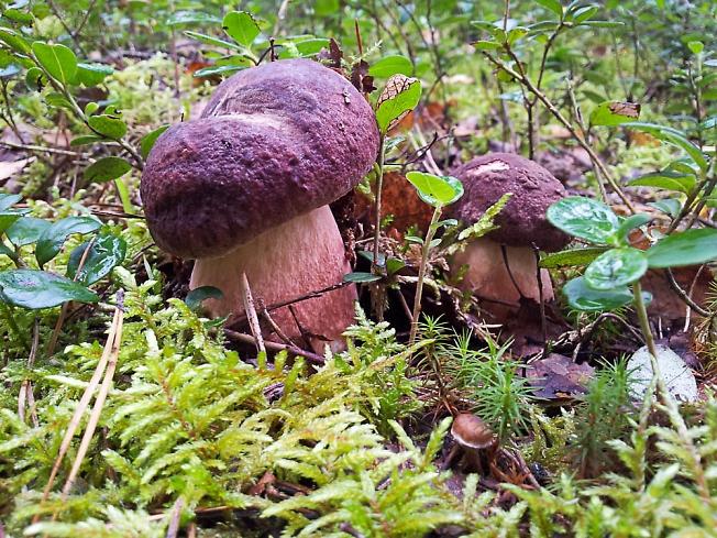 Ещё грибочки