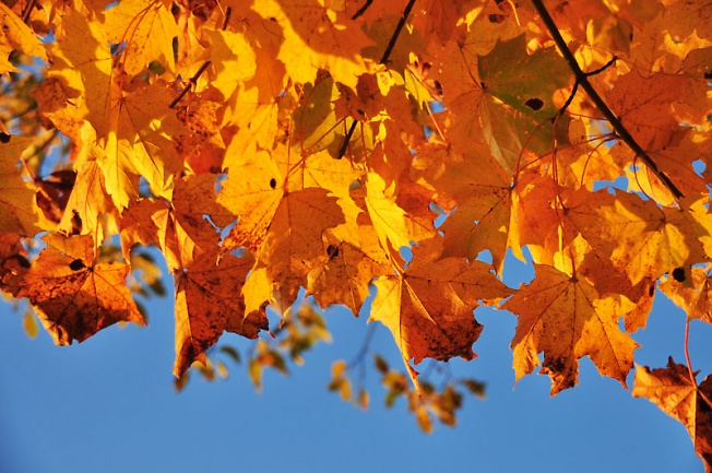 Осени закат