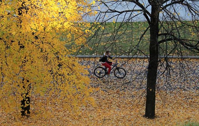 сквозь осень