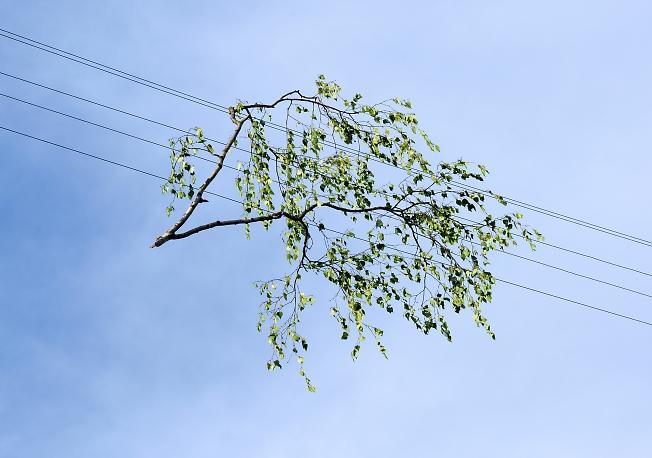 Зелень лета