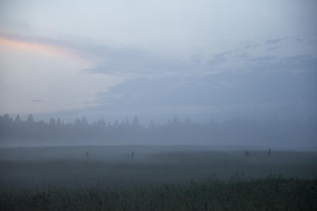 Прогулка в тумане