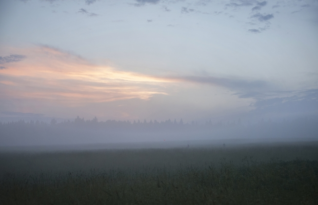 Прогулка в тумане 2