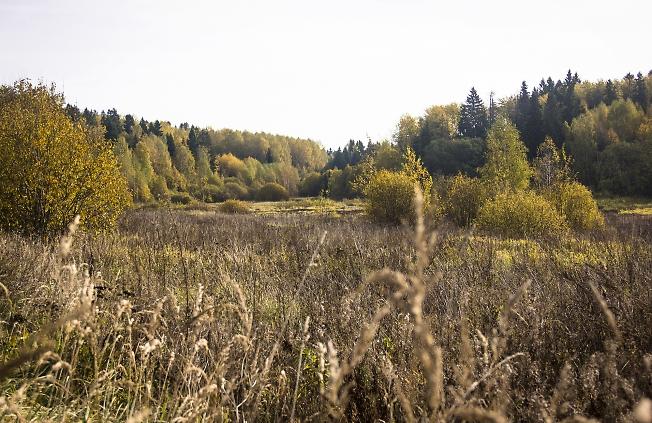 Осенний  луг