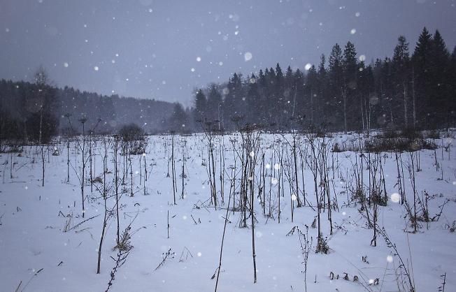 Долгожданный рождественский снегопад