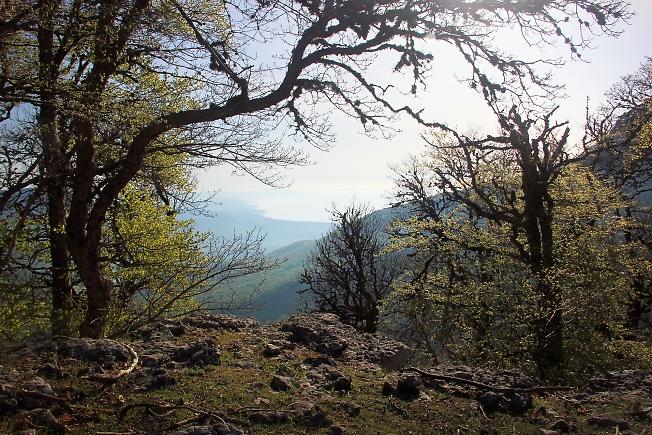 Вид с Царской поляны