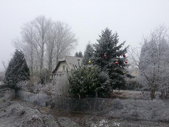 Рождественская ёлка во дворе дома в Бенайме
