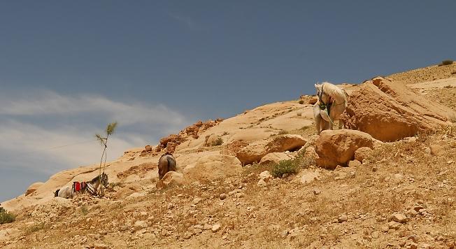 Иордания.(лошадки и горы)