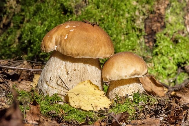 """""""Пора за грибами!""""-3"""