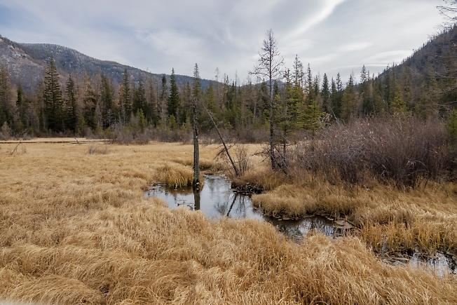 По болотам АЛТАЯ (не далеко от Монгольской границы)