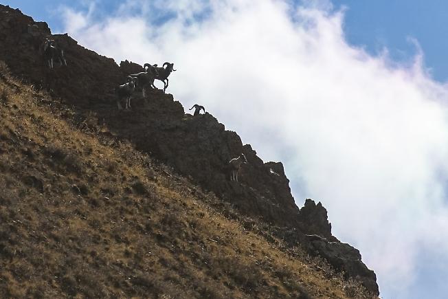 Горы и АРХАРЫ