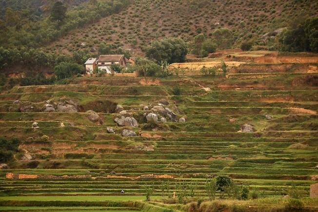 Мадагаскарские поля