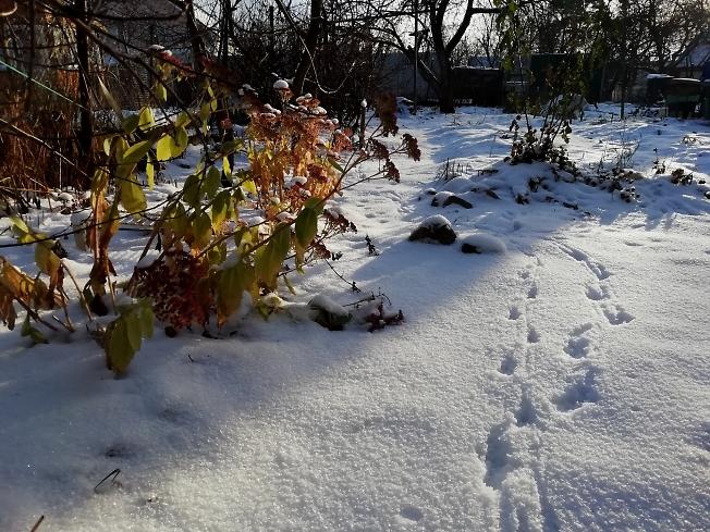 Первый день зимы в саду-огороде