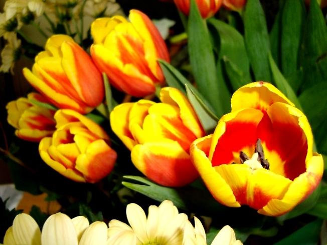 С первым днём Весны !!!