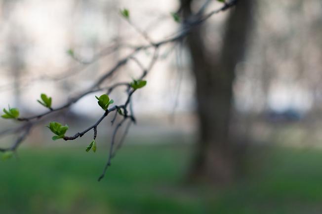 Листья просыпаются