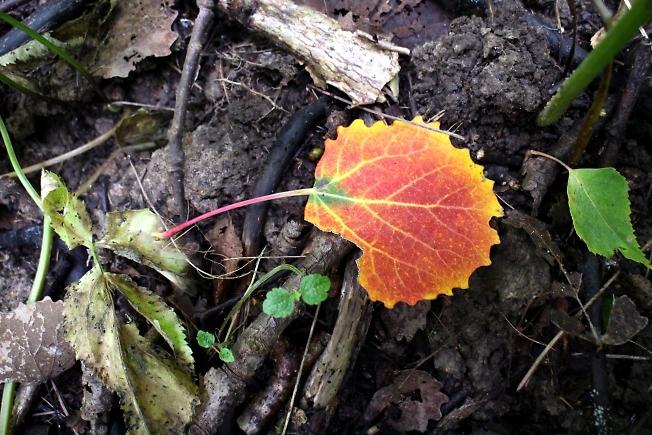 Осенний листик