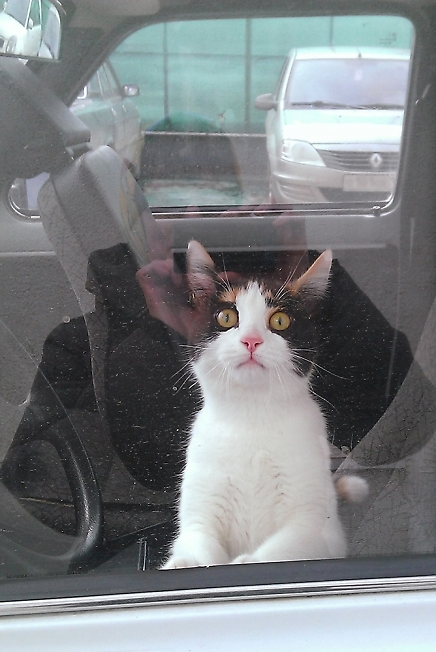 Котик в машине