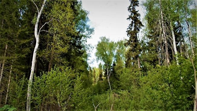 В лесной чаще