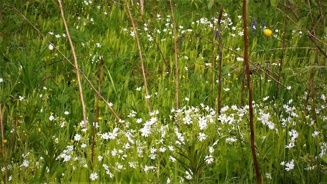 Цветочки белые в лесу
