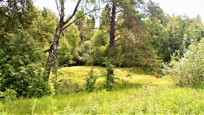 На лесной поляне