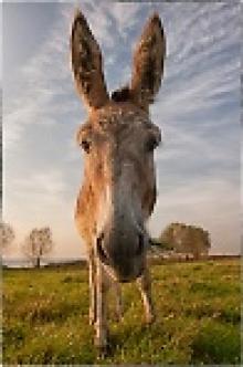 Аватар пользователя Скептик